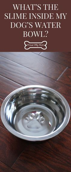 What's The Slime Inside My Dogs Water Bowl? Find Out All About Biofilm, How It Can Affect Your Dog's Health, and How To Properly Clean Your Dog's Bowls | Cleaning Hacks | Dog Health Tips |