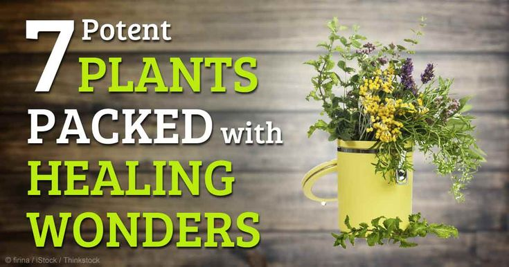 Medicinal plants, like ginger, garlic, and peppermint, are natural remedies that can help support your health. http://articles.mercola.com/sites/articles/archive/2014/09/01/medicinal-plants.aspx