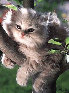 Veggie por natureza !: Existe pureza em cada criatura da natureza.Quando ...