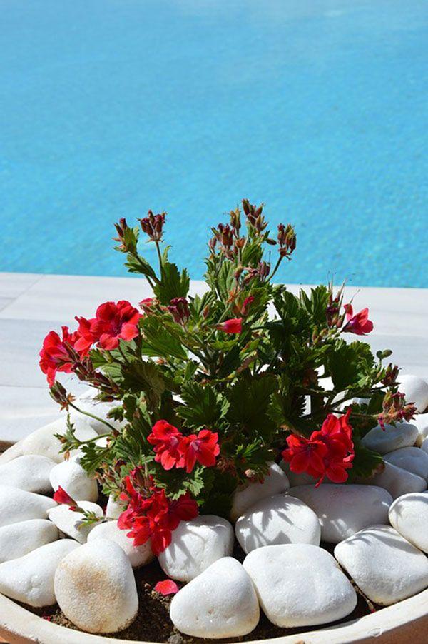 11 plantas, hierbas y flores que mejoran el estado de ánimo