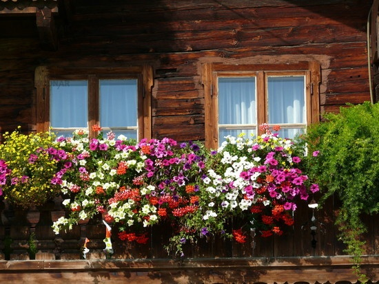 blumen an einem balkon in den alpen balcony window. Black Bedroom Furniture Sets. Home Design Ideas