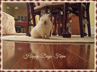 Happy Days Farm: Litter Box Training Your Indoor Rabbit