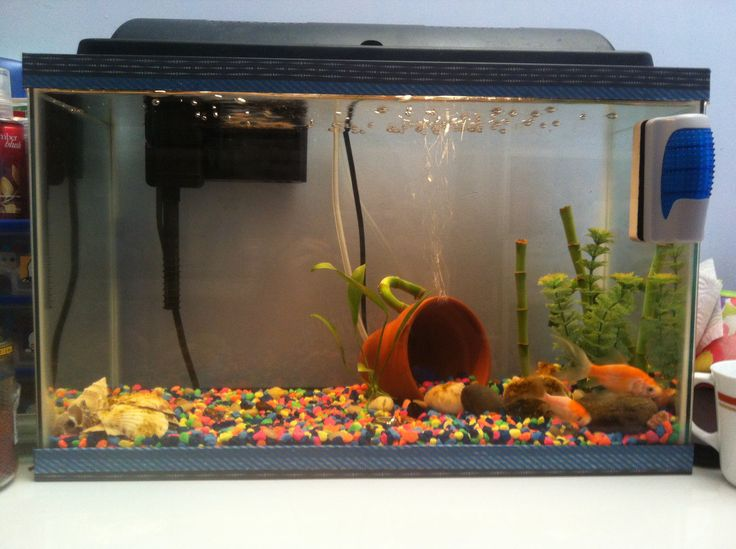 25 best ideas about cheap fish tanks on pinterest tank for Fish tank decorations cheap