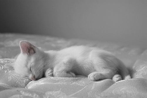 most restful picture EVER. white kitten sleeping on a white bed in a white room. #honkshu