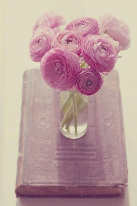 Pink Ranunculus make for STUNNING bouquets and arrangements of wedding flowers. Even something as simple as a few pink Ranunculus in a vase looks elegant and inviting. Ranunculus is available the majority of the year online at GrowersBox.com.