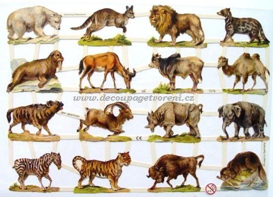 Vzor 37, Africká zvířata