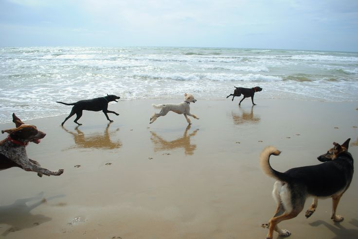 Dog beaches in Italy are not so common, but if you can find one you will see what is the meaning of the word 'joy' for a dog! Sabaudia - Italy