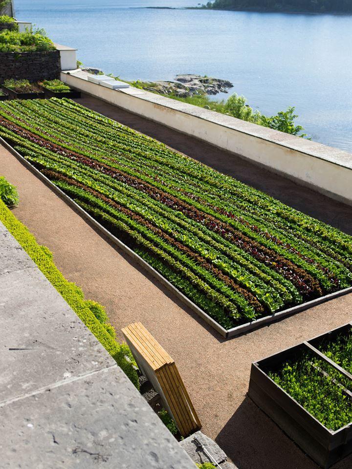 Salad greens - beautiful layout - Sallad på Läckö slott
