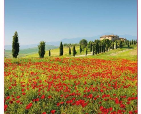 Welcome in Tuscany - ToscanAmo.com_The Tuscany Website