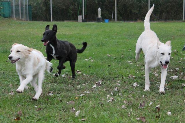 I cuccioli corrono felici! :)