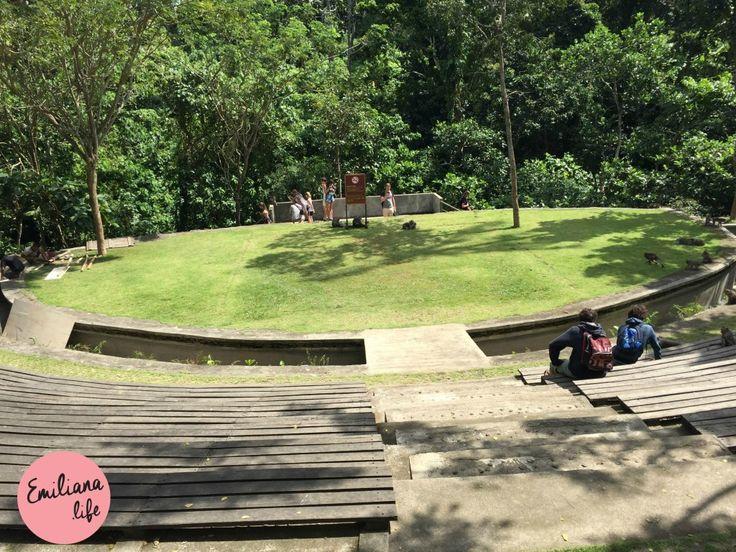 Sacred Monkey Forest Sanctuary, teatro, UBUD, Bali, Indonesia