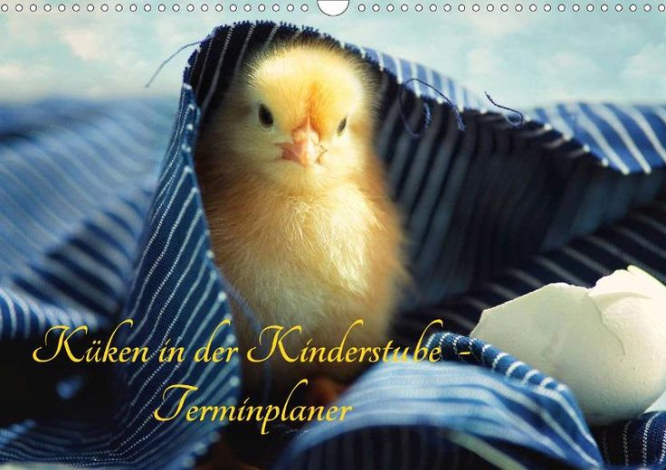 Küken in der Kinderstube Terminplaner - CALVENDO Kalender von Tanja Riedel