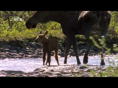 #135 Ekstremalna Alaska - Film Dokumentalny [Lektor PL] - YouTube
