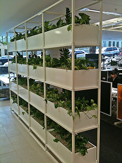 Green Design can give you partitions, without closing you in! Staff love these in thier office and are happier in the workplace! It's a vertical garden with devils ivy and zanzibar gems!