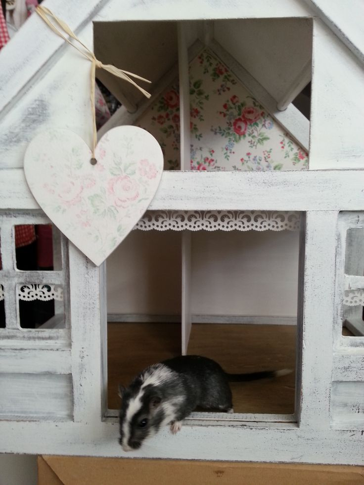 renovation doll house shabby white grey  our gerbil inspector <3