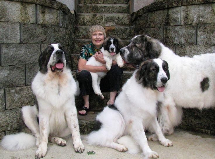Pyrenean Mastiff... Two please.
