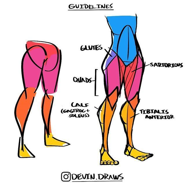 Back Muscles Drawing Back Muscles In 2020 Human Anatomy Drawing Drawing Legs Drawing Tips