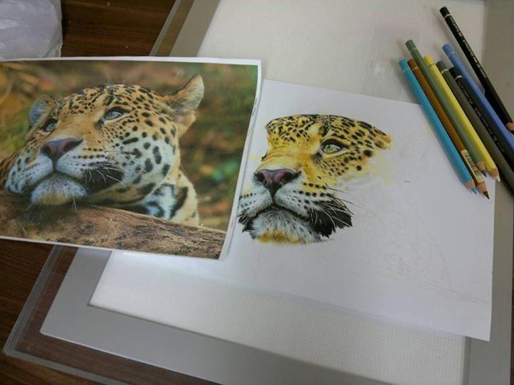Tiger in progress - by Jane Bildsøe