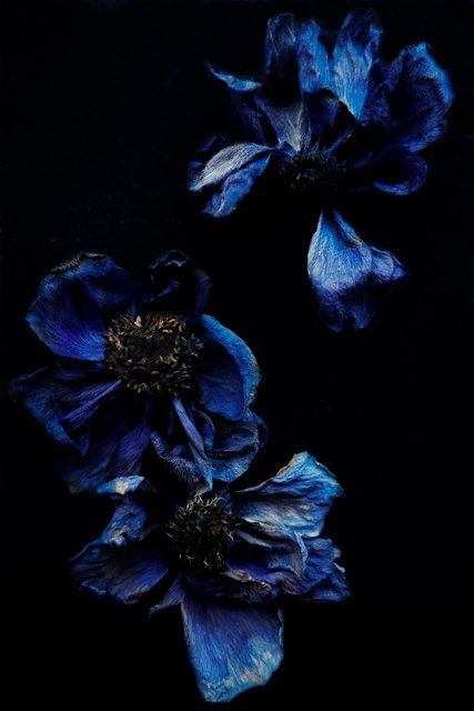 Whitney Ott Photography #flowers