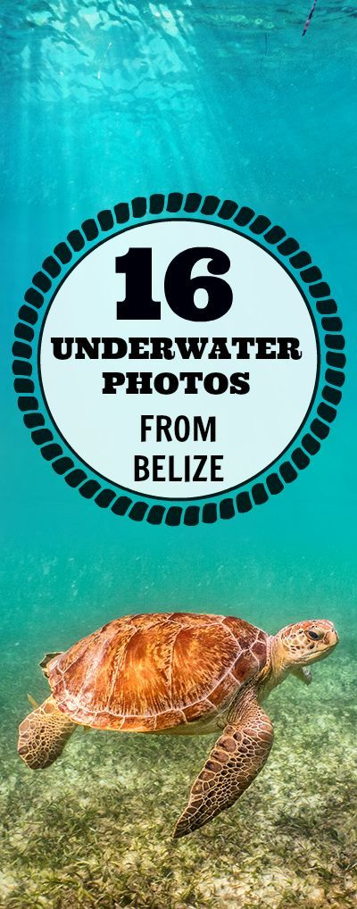 16 Beautiful Underwater Photos from the Belize Barrier Reef.