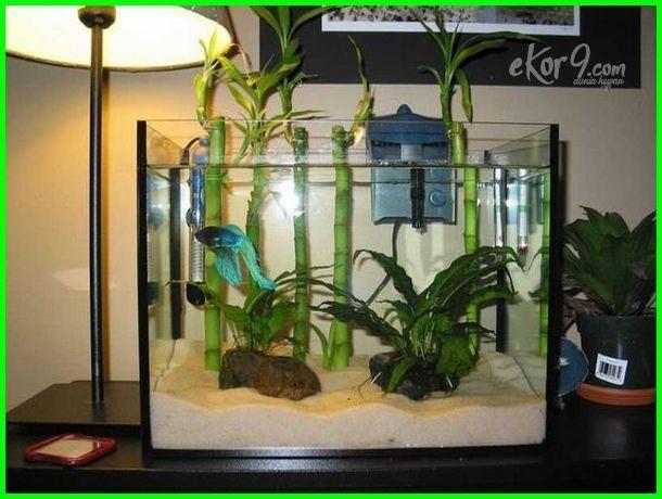 Akuarium Ikan Cupang Aquarium Ikan Cupang Aquarium Ikan Cupang Hias Aquarium Ikan Cupang Minimalis Akuarium Ikan Cupang Aquarium Ikan Ikan Cupang Binatang