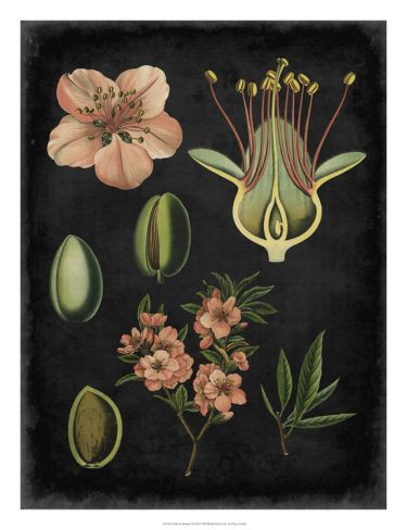 Study in Botany I Giclee Print by Vision Studio at Art.com