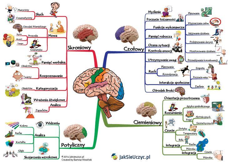 jak się uczy mózg - Szukaj w Google