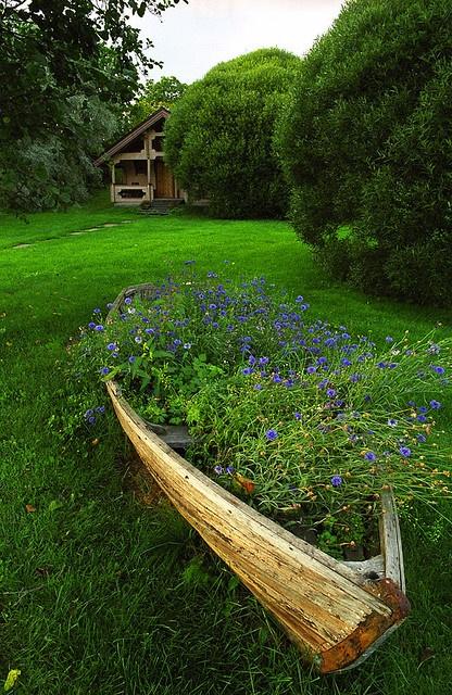 Blue flowers, Turku Archipelago