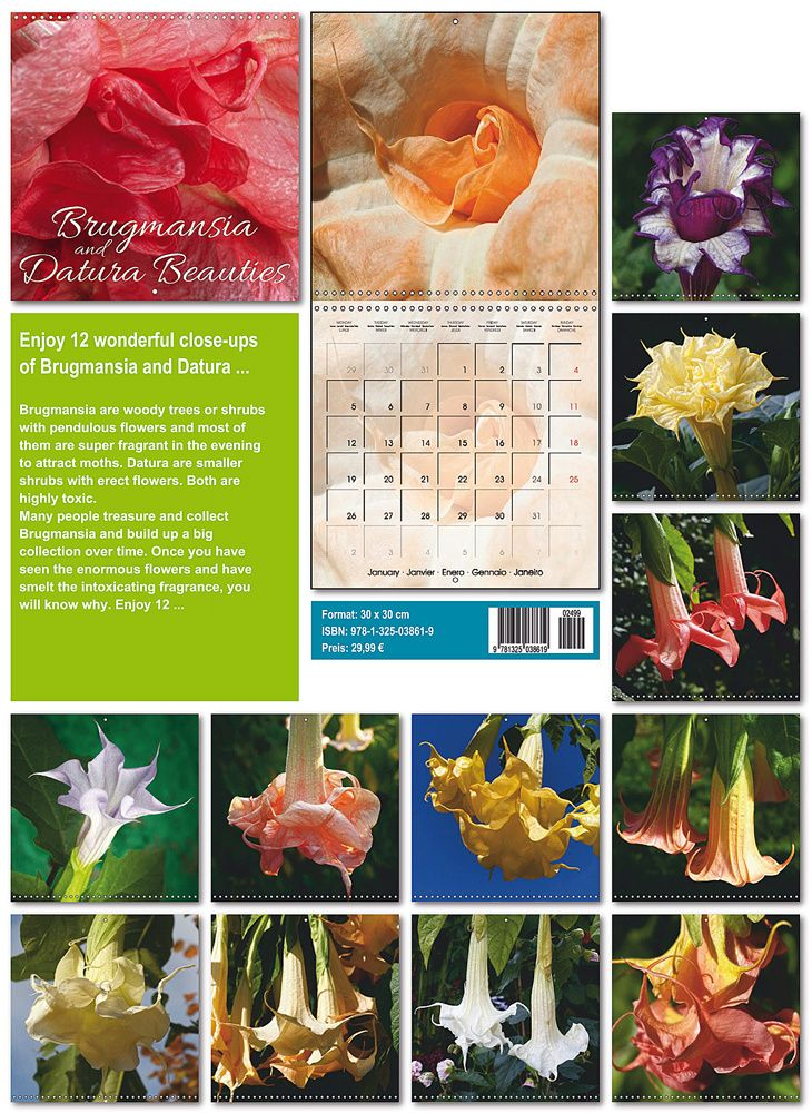 I am very happy to announce the publication of Brugmasia and Datura Beauties 2015 international calendar.  Brugmansia and Datura Beauties 2015 comes as an international square wall calendar which unfolds to its double lenght. It features 5 languages, English, French, Spanish, Italian and Portoguese and is printed on premium paper. Its is available from now via Amazon.co.uk for example. Of course it is available at any other bookshop worldwide via the titel and the isbn number.