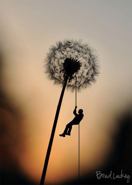Giant Dandelion   Flickr - Photo Sharing!