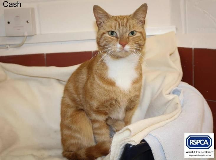 Cash Was Found As A Stray On Egan Road Birkenhead Ch43 Area He Is Not Ready For Rehoming Just Yet Ginger Cats Cats Animals