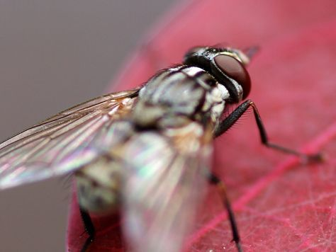 Fly Infestation: How to Get Rid of Flies In The House and Around Your Homestead | Garden Valley Homestead