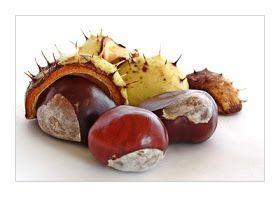 Schnu1 - Kräuterhexe: Rosskastaniencreme selber machen - Homemade horse chestnut slave