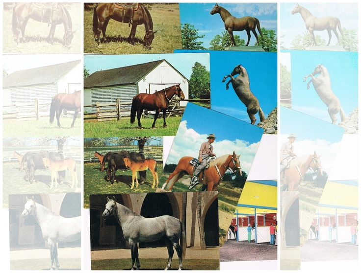 Vintage Horse Post Cards - 1950s 1960s Equine Photography - TV Palomino RICK, Man O'War statue, Ak-Sar-Ben Race Track, TX Gov Allan Shivers by IrrenaysTreasures on Etsy
