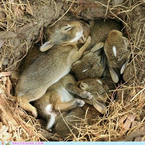 Bunnies nestling