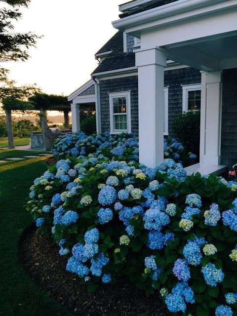 Beautiful Garden Hydrangea Cottage Blue Gardens R On Design Ideas