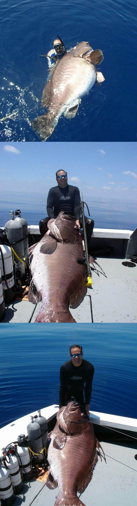 Best 25 spear fishing ideas on pinterest spearfishing for Free fishing stuff