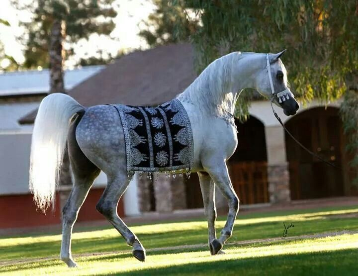 Arabian. So gorgeous
