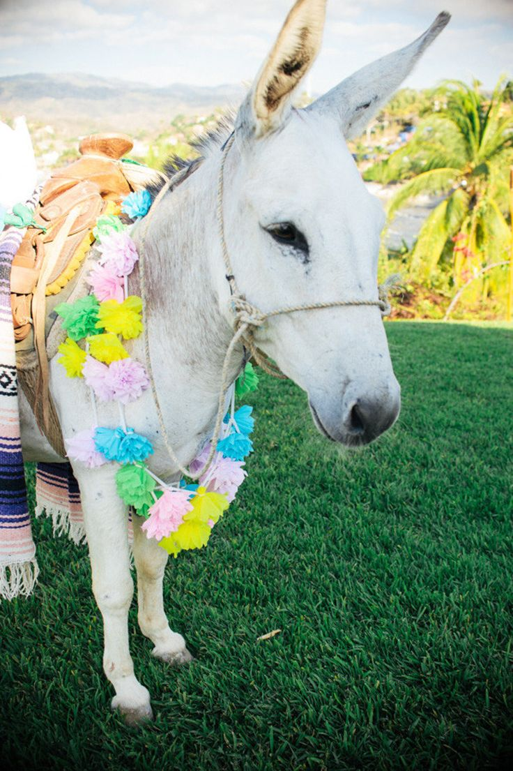 burro genius best images about events s donkeys and infinite  17 best images about how they do it in sayulita wedding from captured by aimee