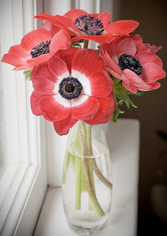 Anemone Flower Season — Wedding Ideas, Wedding Trends, and Wedding Galleries