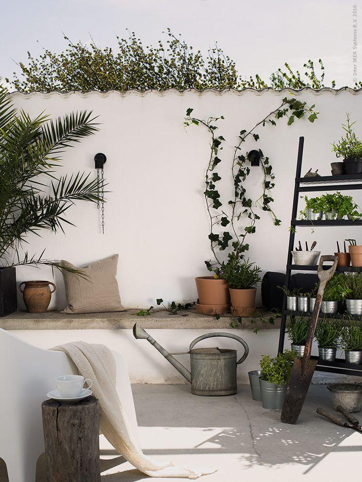 17 bästa bilder om Krukor& Växter på Pinterest Växth