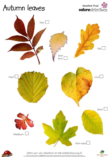 'autunno arriva arriva... carico di colori, aria frizzante....  E non possiamo farci scappare la forza di questa stagione, i suoi colori, i prati e i giardini che ci donano una infinità di foglie e frutti. L'autunno ci introduce alla stagione del freddo, dell'inverno, della riflessione.