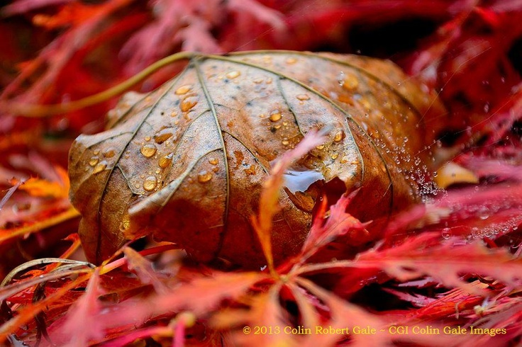 The Colour is Coming - gotta love Autumn