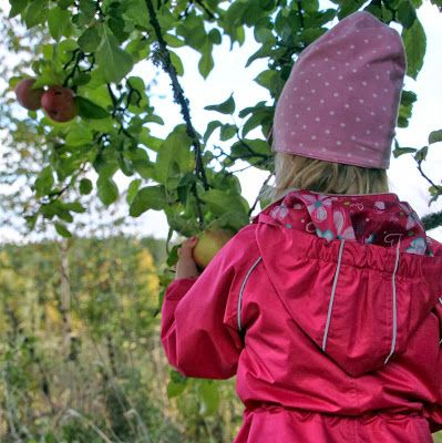 Omenoita poimimassa. Syksy 2013. / Time to pick the apples. Autumn 2013.