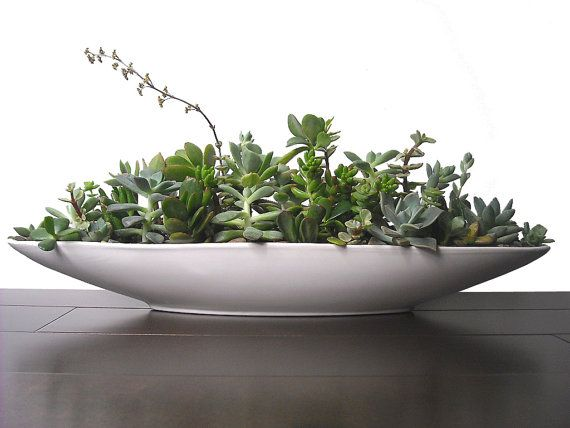 Succulent Mix 21 Quot Boat Shape White Ceramic Modern