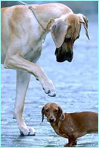 bop.. Great Dane and wiener dogs