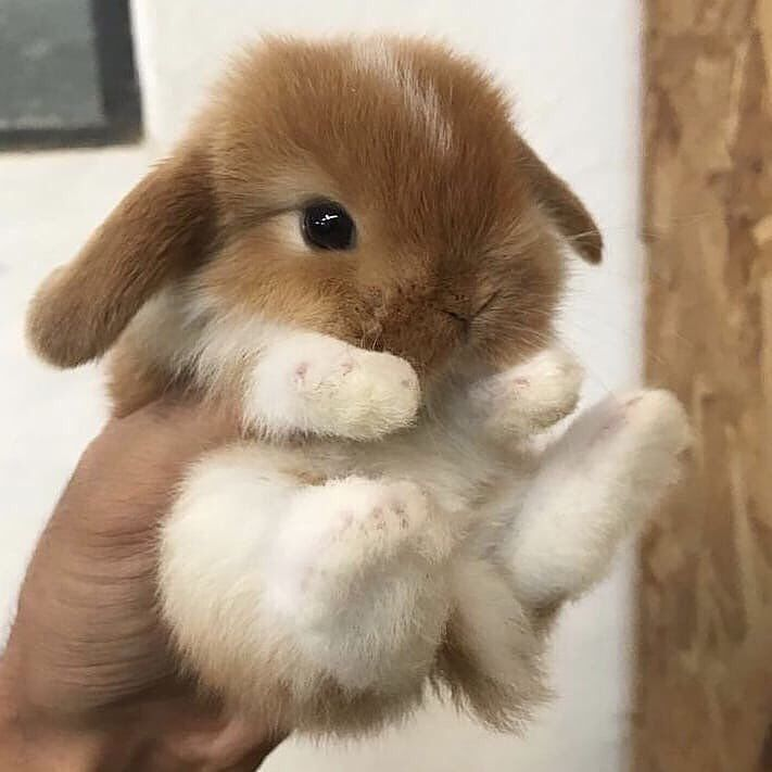 Fashion Style With Images Cute Baby Bunnies Cute Little