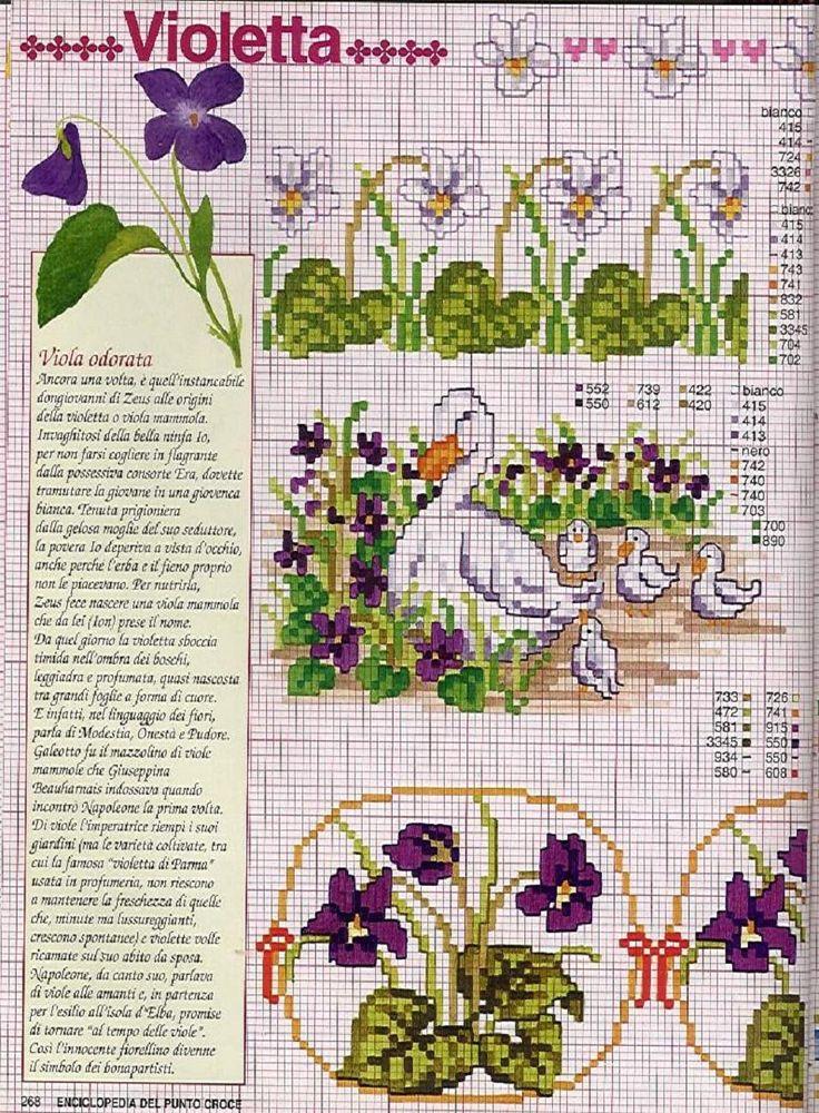 violetes bordures