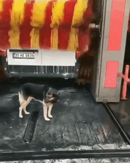 The dog decided to wash [GIF] – Thomas Burke