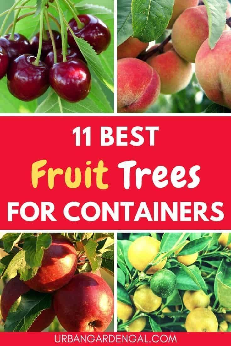 4 In One Fruit Trees